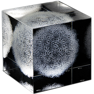 Crystalproteins 3d Data Laser Etched In Glass